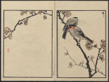 Bairei picture album of one hundred birds (Bairei hyakuchō gafu) : [volume 3]