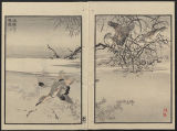 Bairei picture album of one hundred birds (Bairei hyakuchō gafu) : [volume 2]